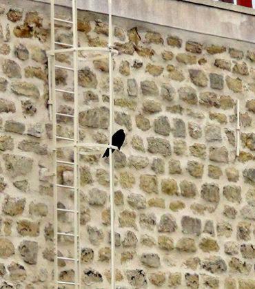 Oiseau de malheur, par Nicole Desjardins